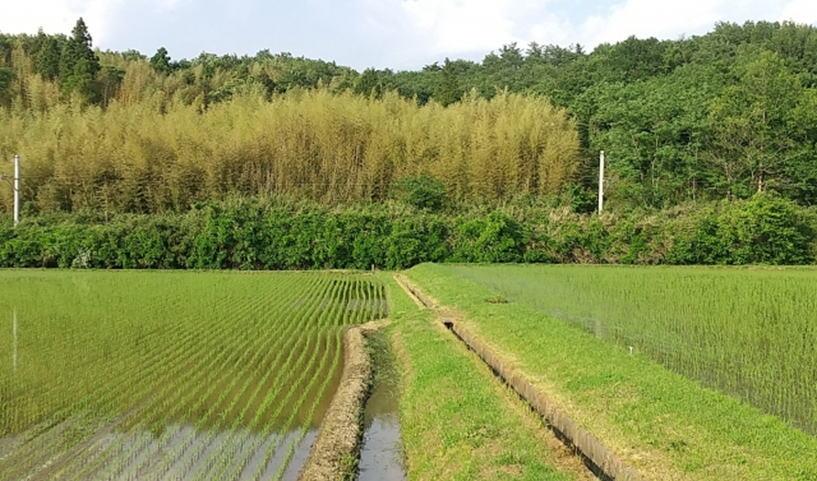 田、畑 ちょっと特別な農地の登記